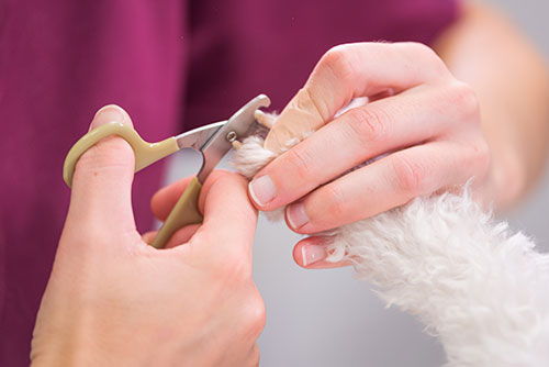 Nail Trim Clinic – June 21st